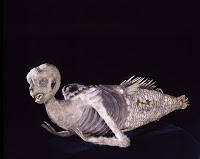 Fiji-Mermaid