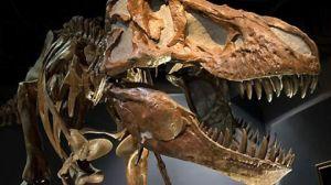0_21_081028_t_rex_skeleton