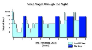 five-stages-of-sleep-through-the-night