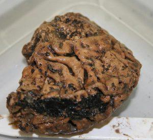 Heslington-brain