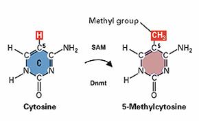 DNA_Methylation_in_Vertebrates_a