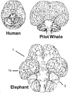 Ele-brain