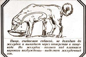pavlovdog