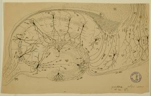 santiago-ramon-y-cajal-estructura-y-conexiones-del-asta-de-ammon-y-la-direccion-del-impulso-nervioso-dibujo-tinta-negra-so