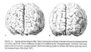 Gauss_Brain-724x420