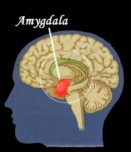 amygdala_alarm-copy