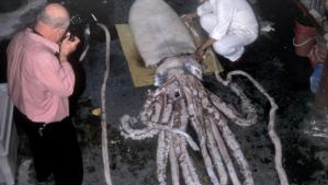 huge-squid