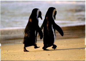penguin_couple