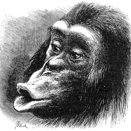 Pouting_Chimp_Fig18_Expression
