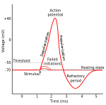300px-Action_potential.svg