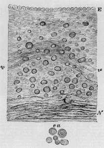Neuro Virchow