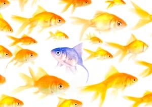 iStock_fish_small