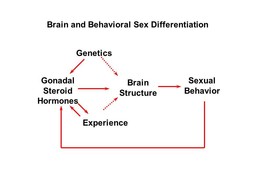 El cerebro y el sexo – Neurociencia